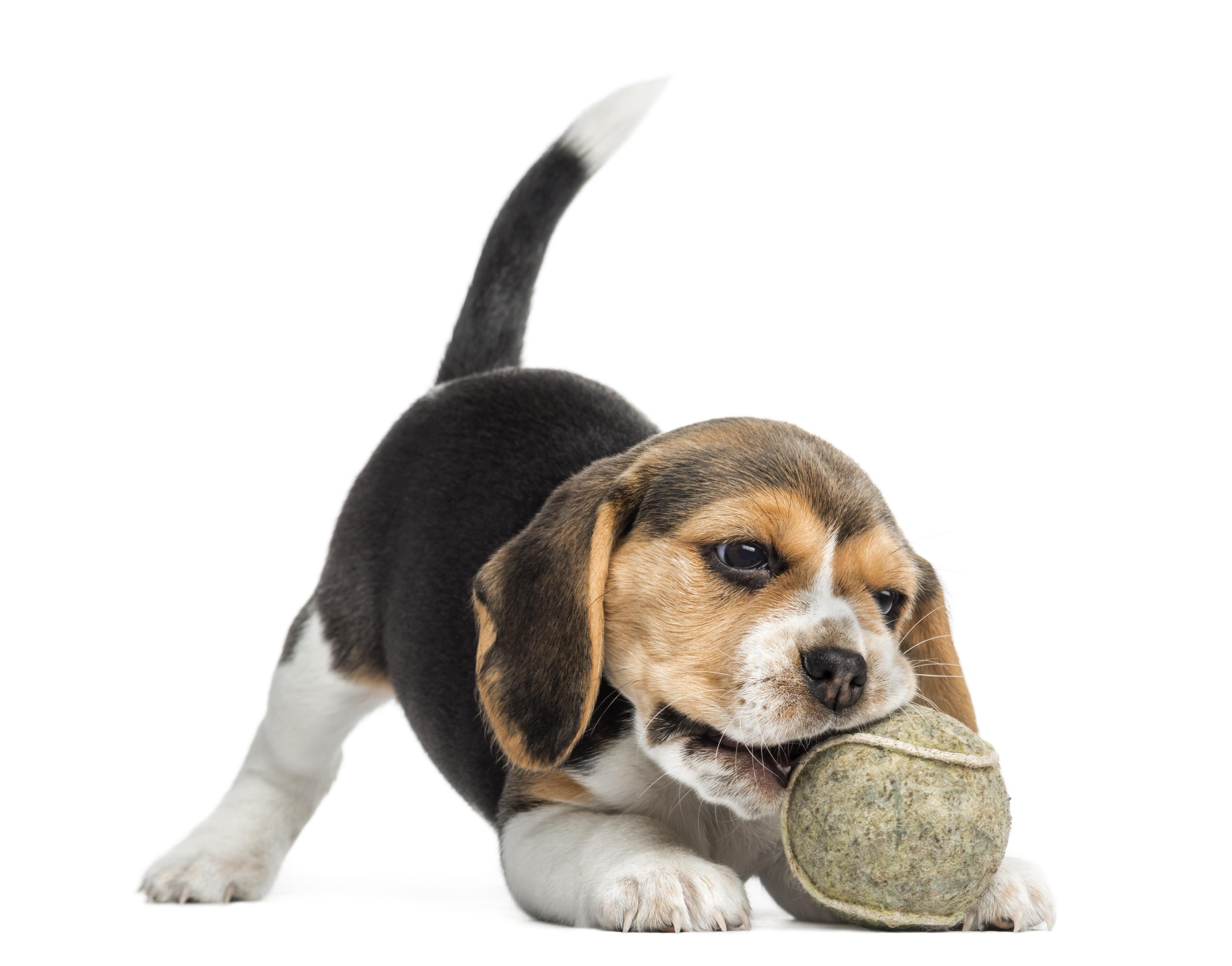 02b Puppy startpakket