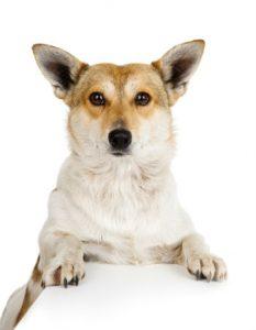Nwe hond in huis 350x450